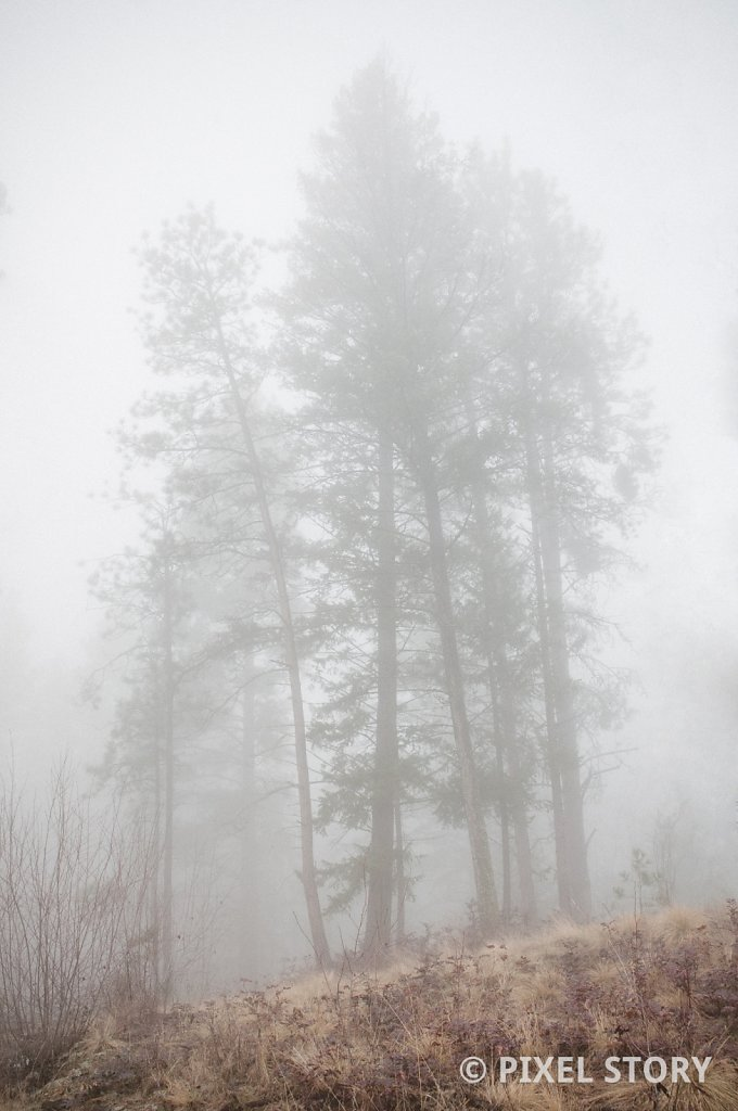 Cluster of trees in fog