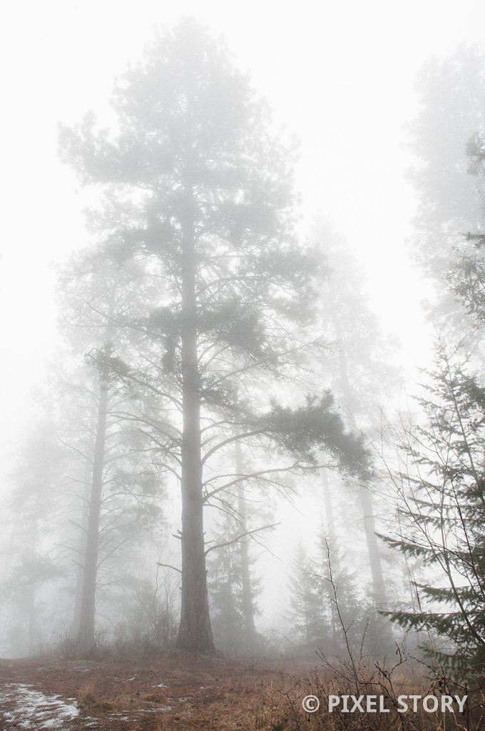 Silent guardians in the mist