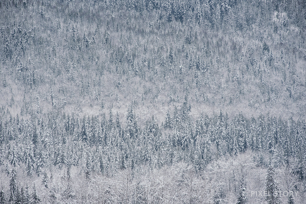 Winter Forest #1
