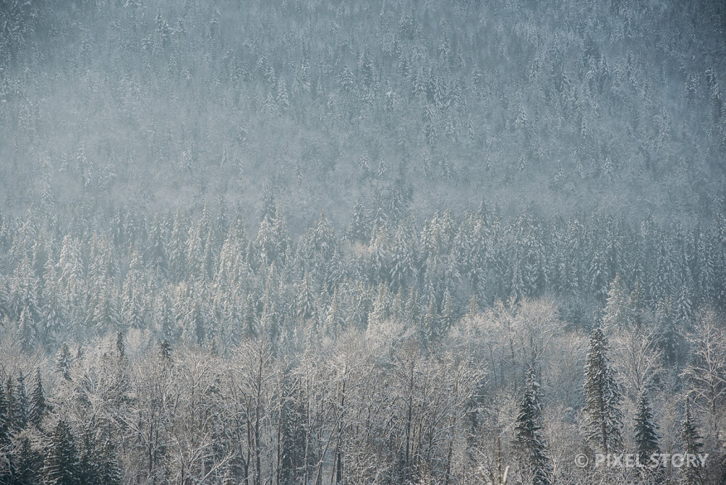 Winter Forest #3