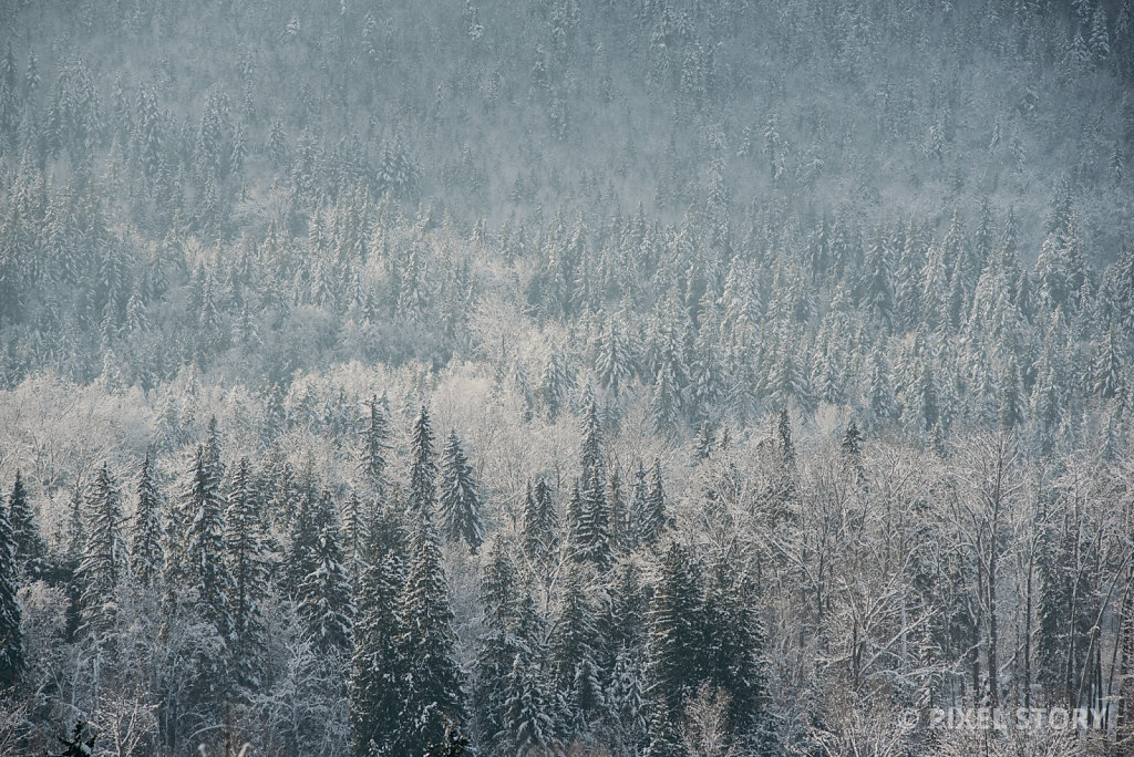 Winter Forest #4